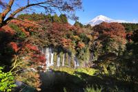 富士山と紅葉の白糸の滝に虹