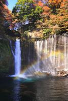 紅葉と白糸の滝に虹
