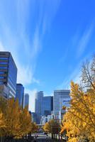 桜通日銀前より名古屋駅方向のイチョウ並木の黄葉