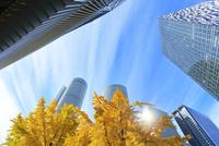名古屋駅周辺の高層ビルとイチョウの黄葉