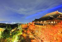 秋の清水寺・紅葉のライトアップに京都の街明かり