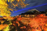 秋の清水寺・紅葉のライトアップ夜景