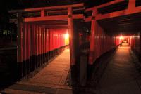 京都・伏見稲荷大社千本鳥居の夜景