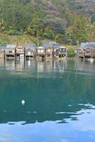 伊根の舟屋とウミネコ