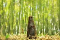 タケノコ 10816001663| 写真素材・ストックフォト・画像・イラスト素材|アマナイメージズ