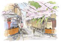 京都祗園白川での桜と舞妓さん