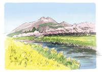 菜の花が咲く大分川と湯布院の桜