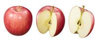 リンゴ素材 ふじ