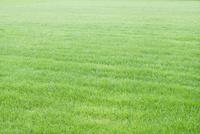 爽やかな芝生