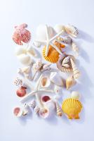 貝がらイメージ