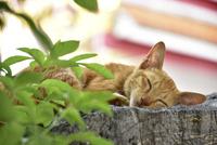 ワットポーの猫