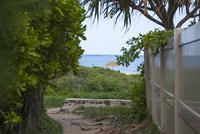 ラニカイビーチへ続く小路