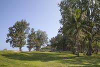 カイルアビーチの木々と空