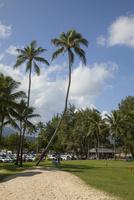 カイルアビーチ  空に伸びるパームツリー