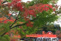 紅葉の勝尾寺