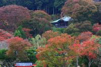 紅葉の勝尾寺 二階堂