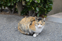 夕陽丘町の野良猫 10838000399  写真素材・ストックフォト・画像・イラスト素材 アマナイメージズ