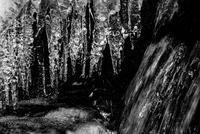 氷柱と流水