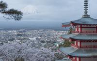 新倉山浅間公園 五重塔と桜と富士山