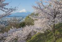 新倉山浅間公園 桜と富士山