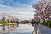 桜並木と映り込み 10850000647| 写真素材・ストックフォト・画像・イラスト素材|アマナイメージズ