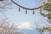 新倉山浅間公園 桜と富士山としめ縄