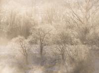 霧氷と川霧
