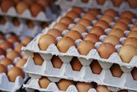卵のパック