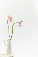 花瓶に入ったガーベラ
