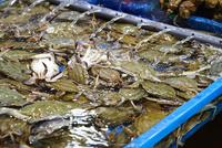 韓国の水産市場