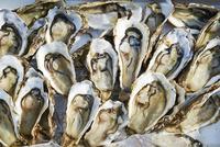 牡蠣 10853001438| 写真素材・ストックフォト・画像・イラスト素材|アマナイメージズ