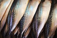 魚 10853001456| 写真素材・ストックフォト・画像・イラスト素材|アマナイメージズ