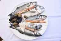アドリア海の魚介類