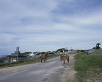 墓地の馬 10858000628  写真素材・ストックフォト・画像・イラスト素材 アマナイメージズ