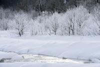 長野県白馬村の霧氷と松川の雪景色