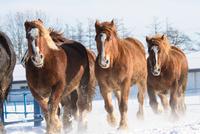雪原を走る馬の集団