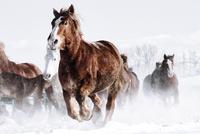 雪原を走る馬