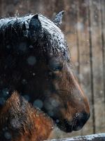 雪の日の馬