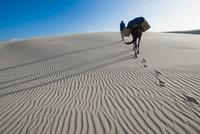 レンソイス砂漠の風紋
