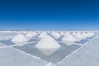 ウユニ塩湖の採潮場