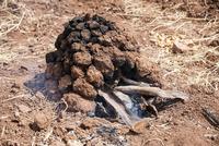 ケチュア族の伝統料理で使用する大地の釜「ウアティア」