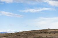 パタゴニアの草原とラクダ科のグアナコ