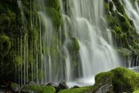 苔むす滝の流れ