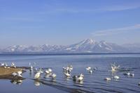 猪苗代湖と磐梯山と白鳥