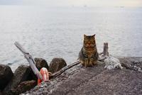 舞浜海岸でお座りするネコ