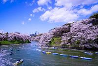 千鳥ヶ淵の桜とボートに乗る人々
