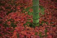 敷紅葉と竹