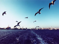 東京湾 11000000374| 写真素材・ストックフォト・画像・イラスト素材|アマナイメージズ