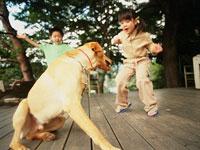 犬と遊ぶ姉と弟