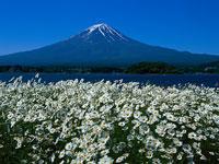 富士山/河口湖